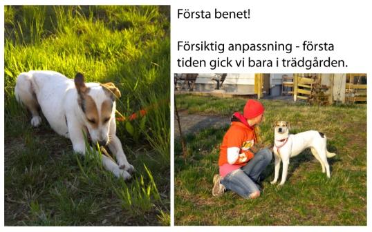 adoptera-gatuhund