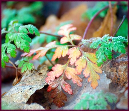 frost-i-hagen