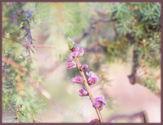 blomma-NY