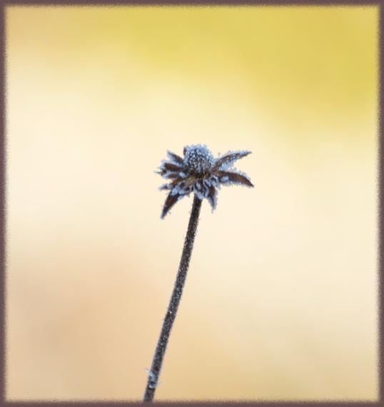 blomsterrabatt