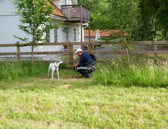 hund-fran-rumanien