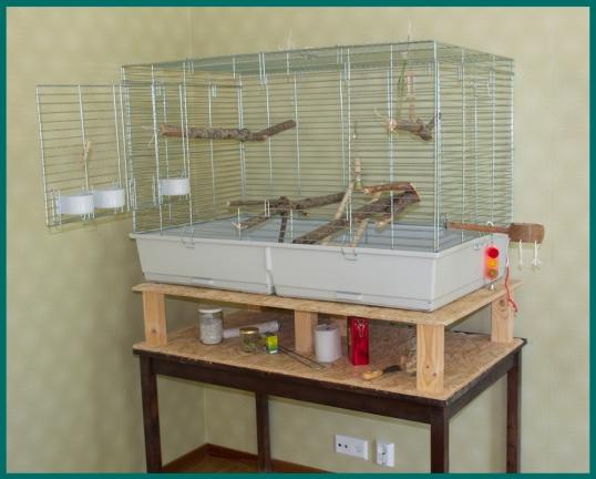 fagelbur-nymfparakit