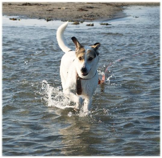 hund-badplats