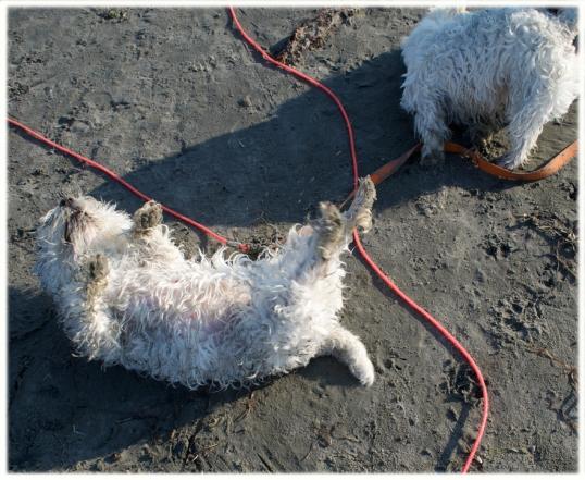 hundar-havet