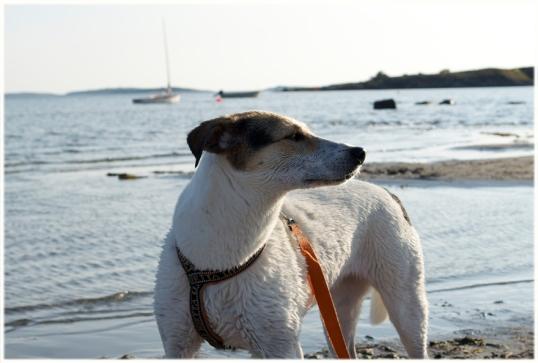 hundar-i-hav