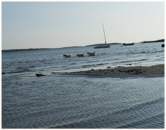 hundar-i-havet1