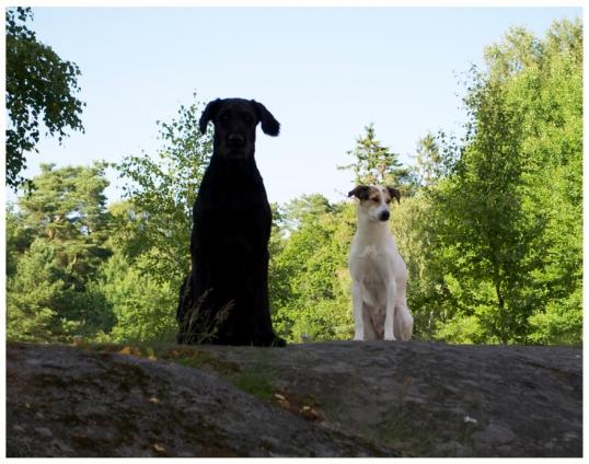 hundar-och-hons