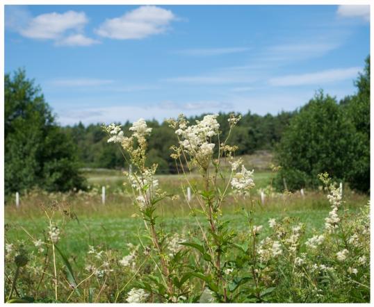 blommor-lantgard