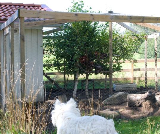 hundar-och-hons-hage