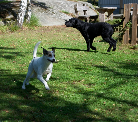 hundar-och-hons-leker