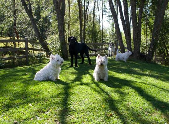 hundar-och-hons1