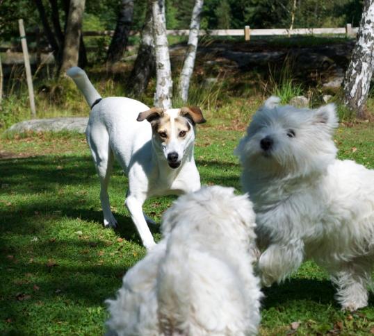 hundar-och-hons2