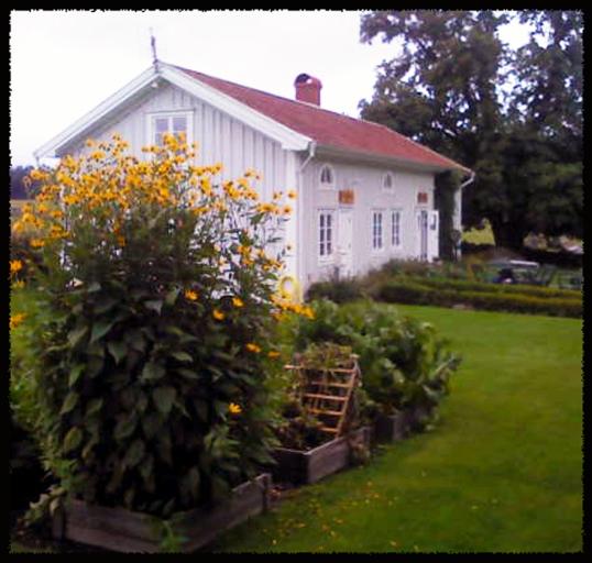 lantgard-blommor