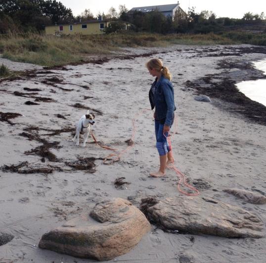 havet-hundar