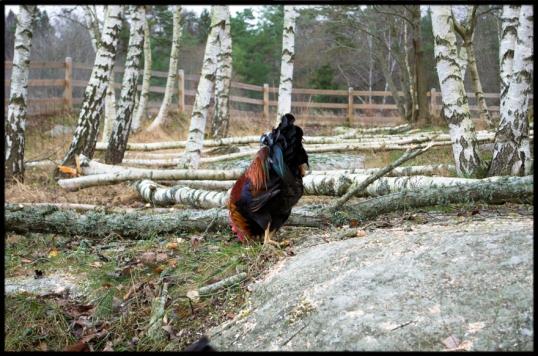 bloggar-om-djur