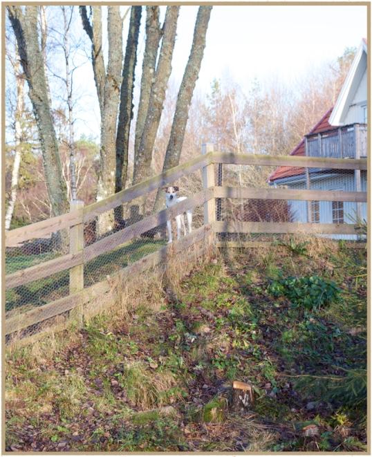 hons-staket2