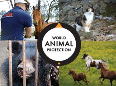 world animal protection bild