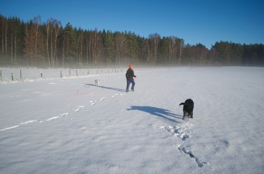 hundprom