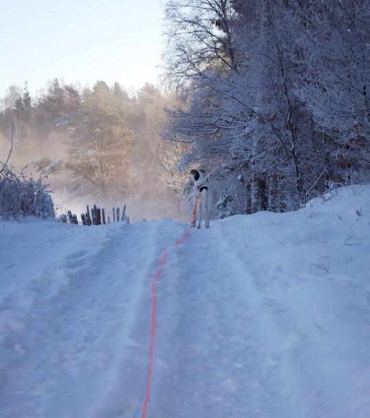 hundpromenad-vintern