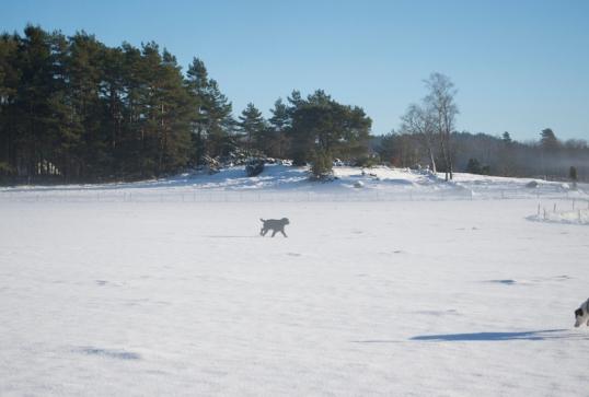 hundpromenader
