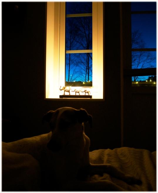 fredagsmys-hund