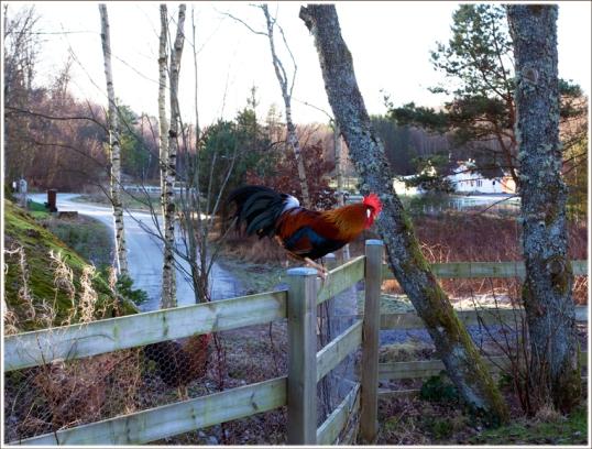 tupp-staket