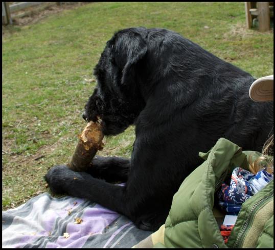 hund-tradgarden