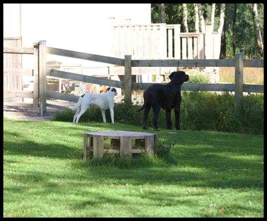 hundar-blandras2