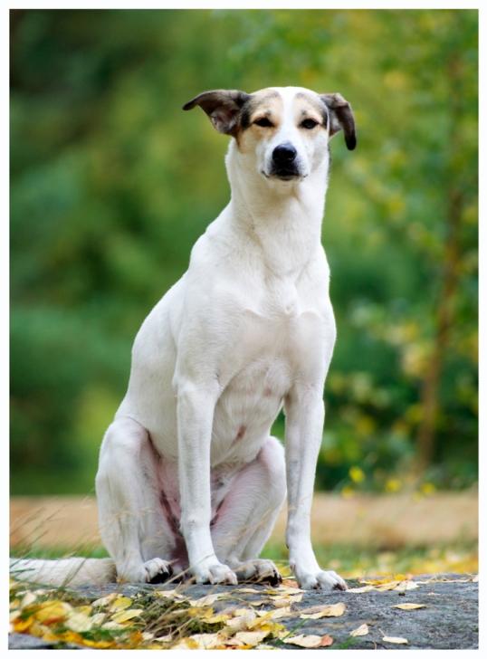 lordagar-hund