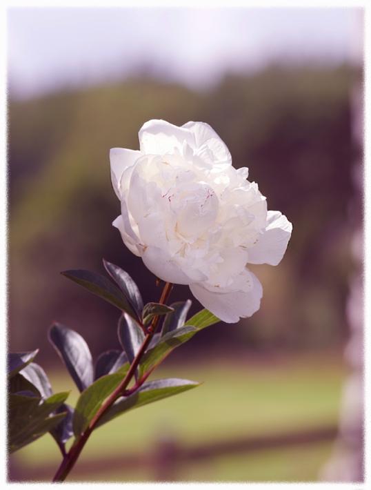 blommor-november1