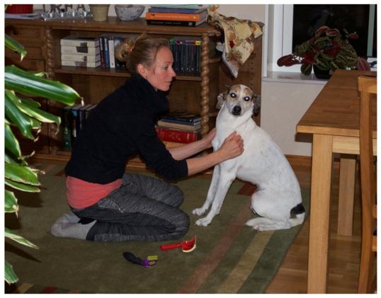borsta-hund