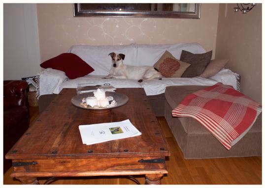 adoptera-hund1