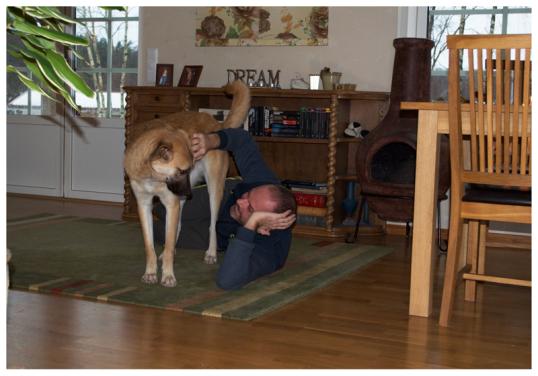 hundar-i-soffan1