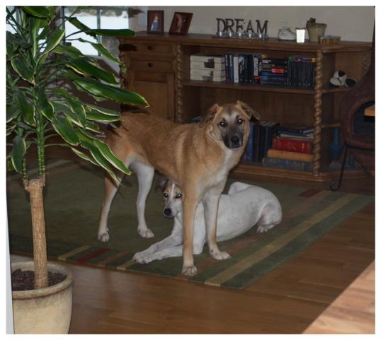 hundar-i-soffan5
