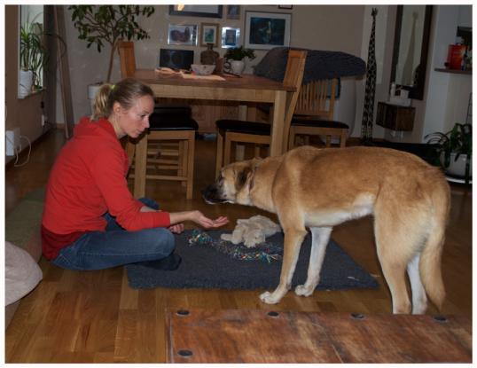rumansk-hund