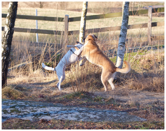 bra-hundbilder1