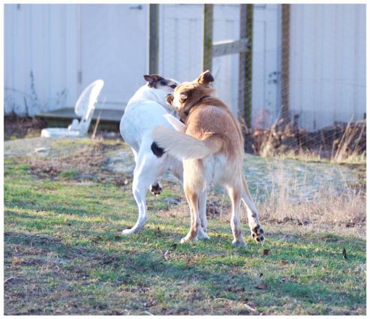 bra-hundbilder3
