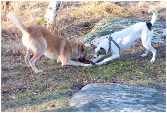 bra-hundbilder5