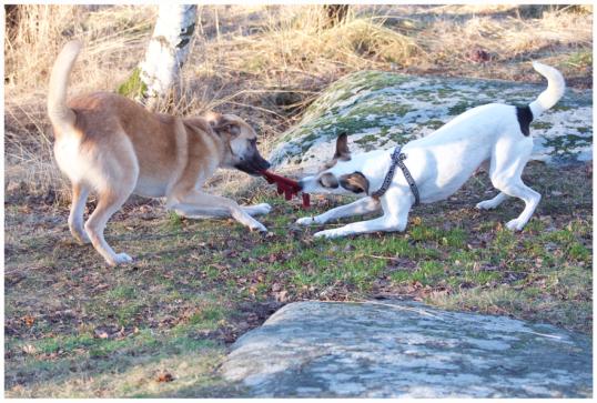 bra-hundbilder6'