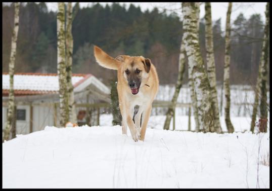 hundar-fran-rumanien
