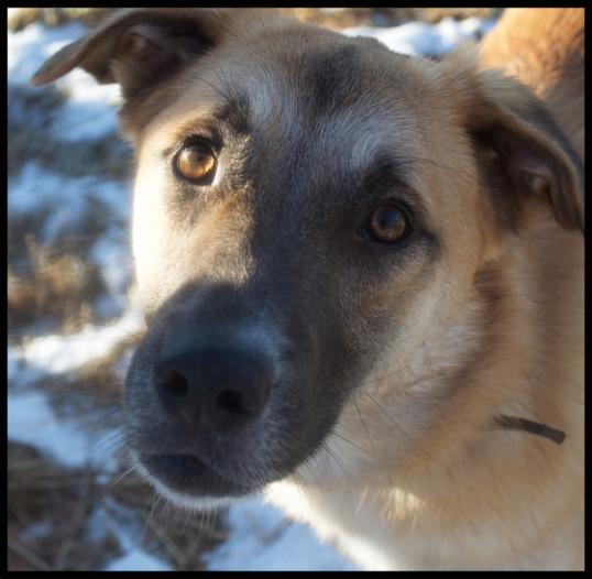 hundar-fran-rumanien2