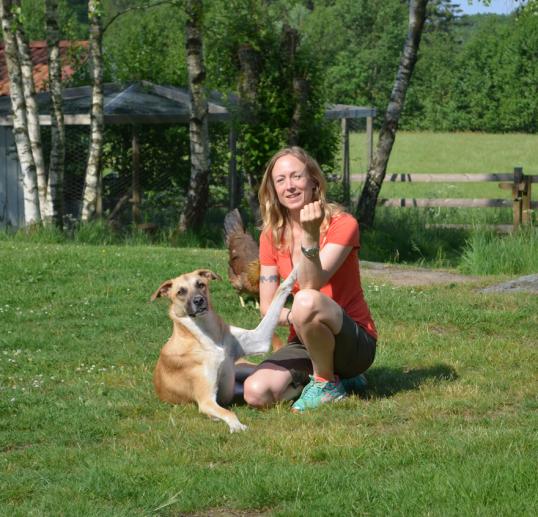 adoptera-en-hund