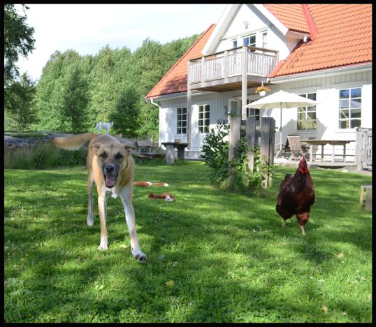 djur-tradgarden7